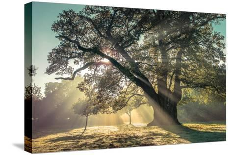 Breaking Through-Assaf Frank-Stretched Canvas Print