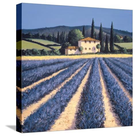 Colors of Summer-David Short-Stretched Canvas Print