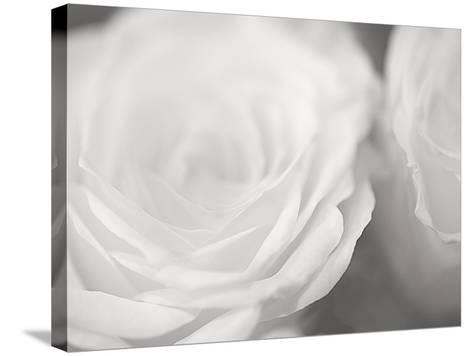 Rose Studies I-James McLoughlin-Stretched Canvas Print