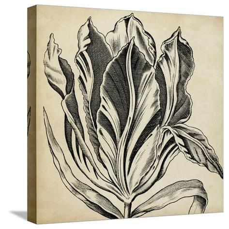Graphic Floral I-Vision Studio-Stretched Canvas Print