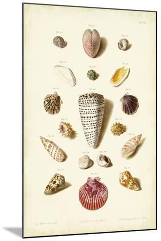 Muller Shells, Tab. III-Gabriel Muller-Mounted Art Print