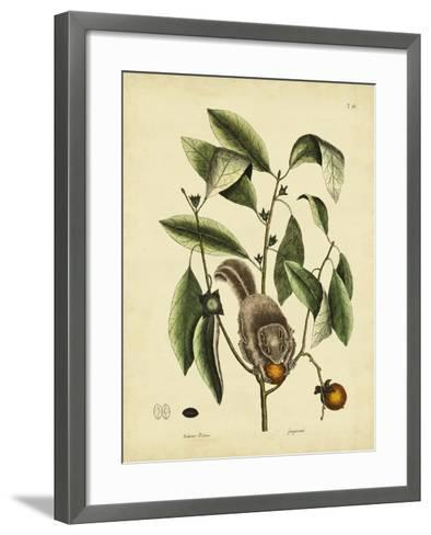 Catesby Flying Squirrel, P. T76-Mark Catesby-Framed Art Print