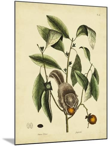 Catesby Flying Squirrel, P. T76-Mark Catesby-Mounted Art Print