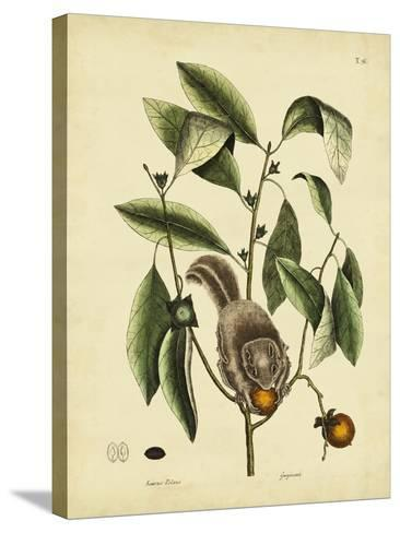 Catesby Flying Squirrel, P. T76-Mark Catesby-Stretched Canvas Print