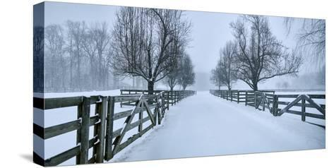 Snowy Road II-James McLoughlin-Stretched Canvas Print