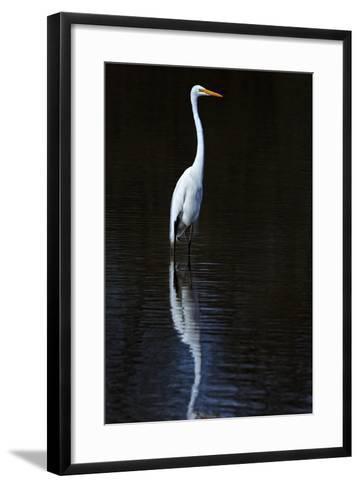 Elegant Egret II-David Drost-Framed Art Print