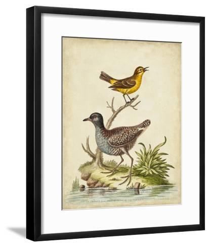 Antique Bird Menagerie II-George Edwards-Framed Art Print