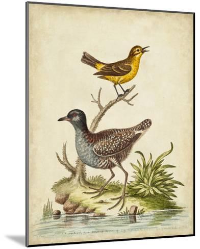 Antique Bird Menagerie II-George Edwards-Mounted Art Print