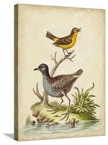 Antique Bird Menagerie II-George Edwards-Stretched Canvas Print