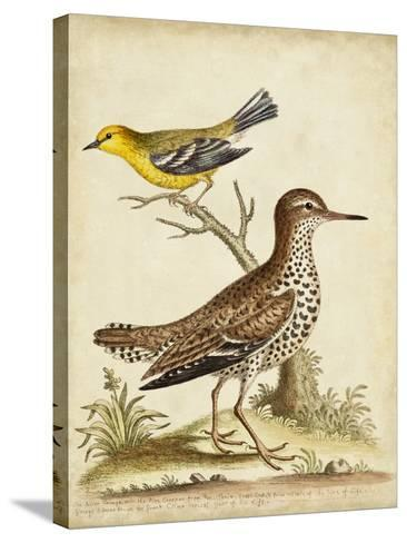 Antique Bird Menagerie I-George Edwards-Stretched Canvas Print
