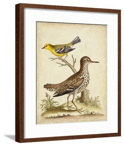 Antique Bird Menagerie I-George Edwards-Framed Art Print