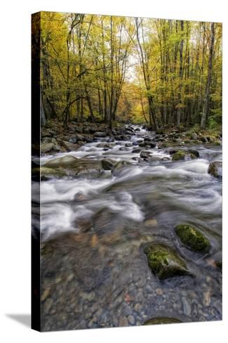 Roaring Waters II-Danny Head-Stretched Canvas Print
