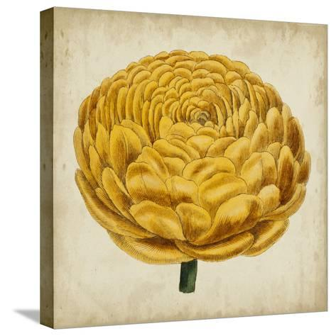 Pop Floral VIII-Vision Studio-Stretched Canvas Print
