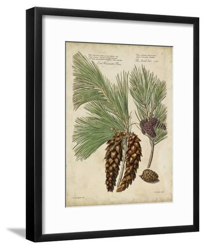 Antique Conifers II-Henry Fletcher-Framed Art Print
