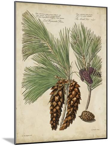 Antique Conifers II-Henry Fletcher-Mounted Art Print