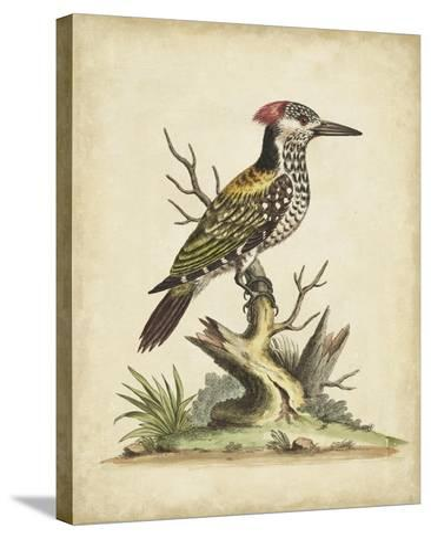 Edwards Woodpecker-George Edwards-Stretched Canvas Print