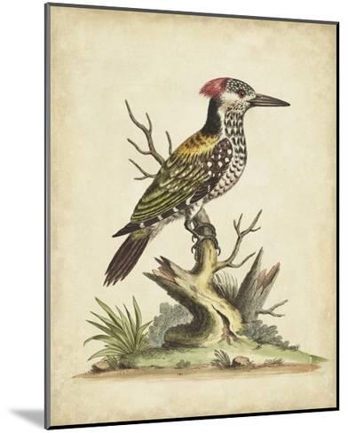 Edwards Woodpecker-George Edwards-Mounted Art Print