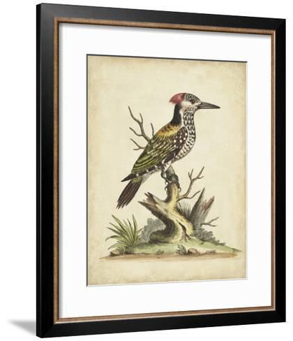 Edwards Woodpecker-George Edwards-Framed Art Print