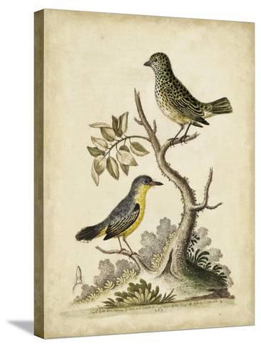 Edwards Bird Pairs VII-George Edwards-Stretched Canvas Print