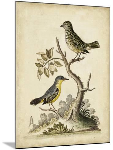 Edwards Bird Pairs VII-George Edwards-Mounted Art Print
