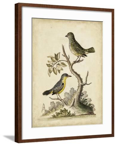 Edwards Bird Pairs VII-George Edwards-Framed Art Print