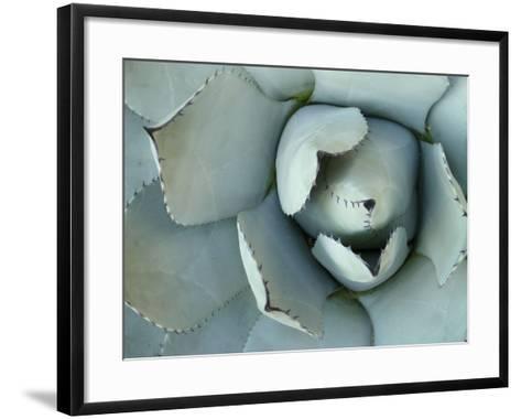 Agave Detail II-Alison Jerry-Framed Art Print