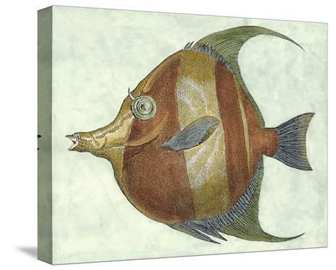Small Angel Fish II-Jennifer Goldberger-Stretched Canvas Print
