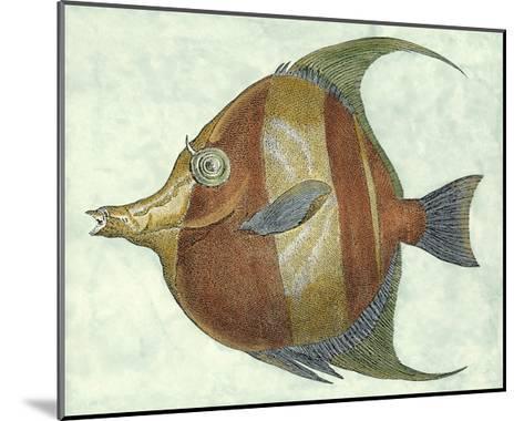 Small Angel Fish II-Jennifer Goldberger-Mounted Art Print