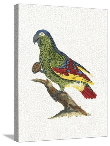 Crackled Antique Parrot II-George Shaw-Stretched Canvas Print