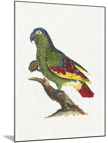 Crackled Antique Parrot II-George Shaw-Mounted Art Print