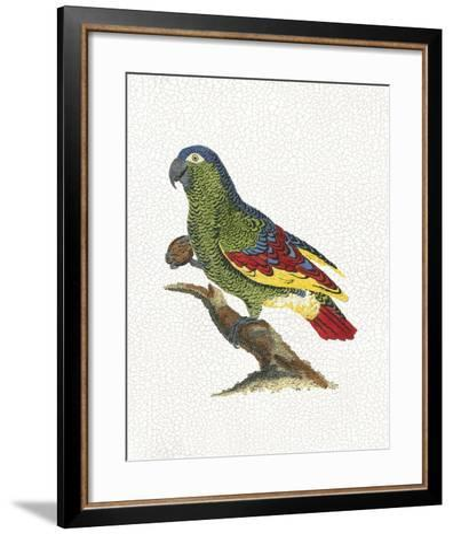 Crackled Antique Parrot II-George Shaw-Framed Art Print