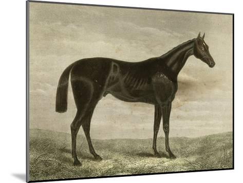 Pretender--Mounted Art Print