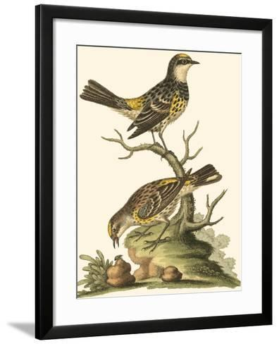 Petite Bird Study III-George Edwards-Framed Art Print