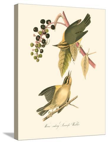 Audubon's Warbler-John James Audubon-Stretched Canvas Print