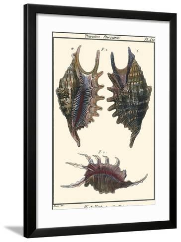 Sea Shells VIII-Denis Diderot-Framed Art Print