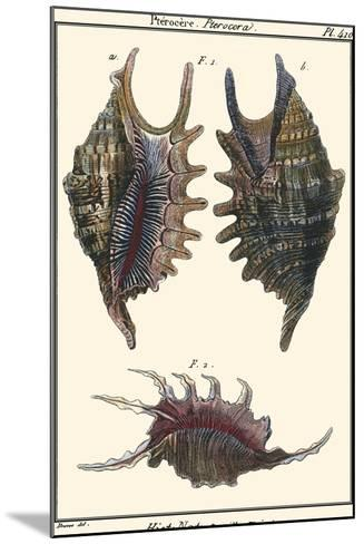 Sea Shells VIII-Denis Diderot-Mounted Art Print