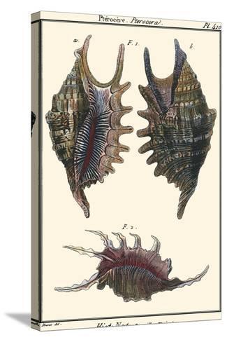 Sea Shells VIII-Denis Diderot-Stretched Canvas Print