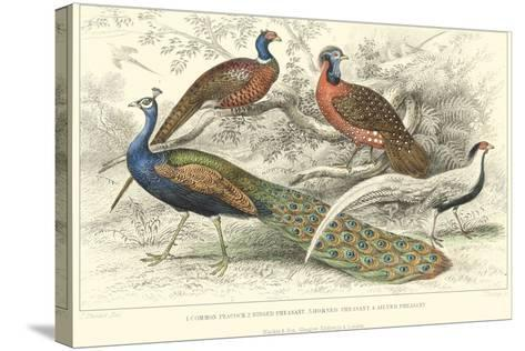 Peacock & Pheasants-J. Stewart-Stretched Canvas Print