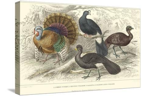 Turkey & Curassows-J. Stewart-Stretched Canvas Print