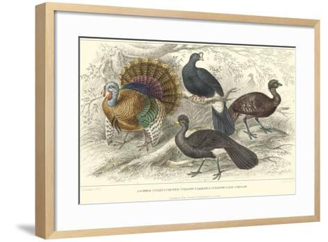 Turkey & Curassows-J. Stewart-Framed Art Print