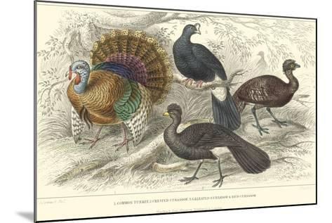 Turkey & Curassows-J. Stewart-Mounted Art Print