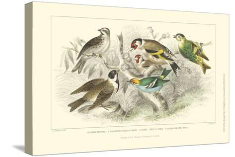 Goldfinch, Buntings & Wrens-J. Stewart-Stretched Canvas Print