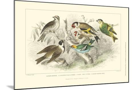 Goldfinch, Buntings & Wrens-J. Stewart-Mounted Art Print