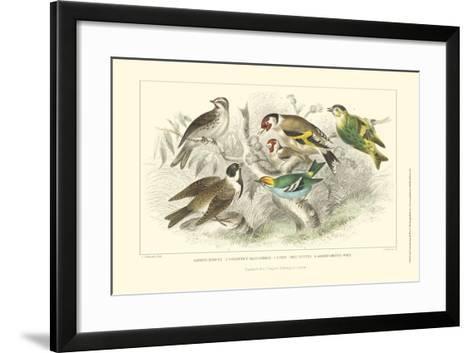 Goldfinch, Buntings & Wrens-J. Stewart-Framed Art Print