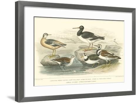 Oyster Catchers-J. Stewart-Framed Art Print