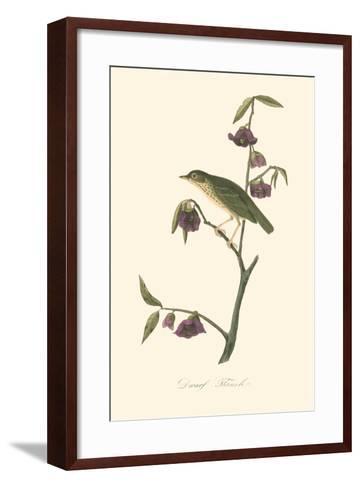 Audubon's Thrush-John James Audubon-Framed Art Print