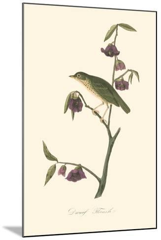 Audubon's Thrush-John James Audubon-Mounted Art Print