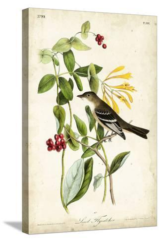 Audubon Bird & Botanical II-John James Audubon-Stretched Canvas Print