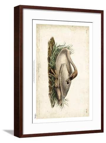 Trumpeter Swan II-John James Audubon-Framed Art Print