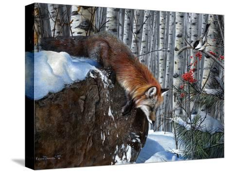Fox in Winter-Kevin Daniel-Stretched Canvas Print